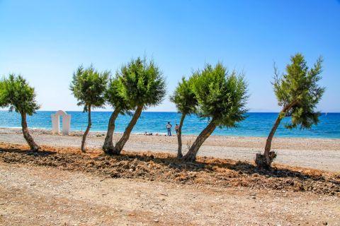 Theologos Beach: Some trees, providing reviving shade. Theologos beach.