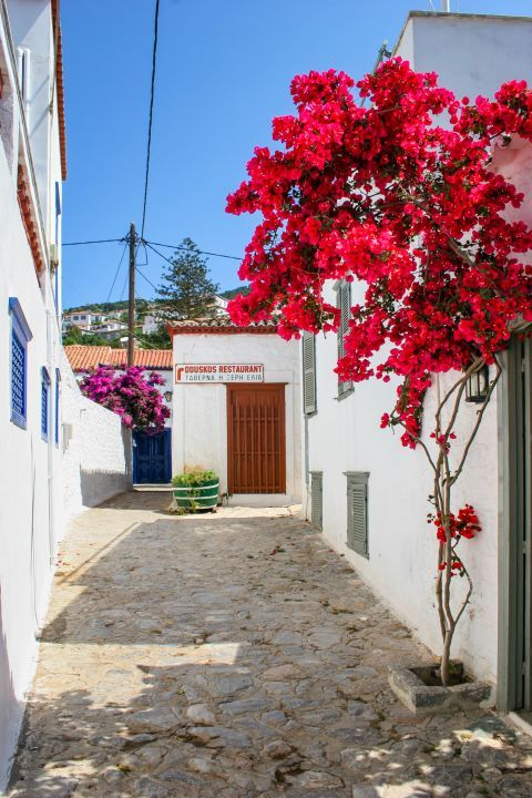 Town: A whitewashed corner with fuchsia flowers.