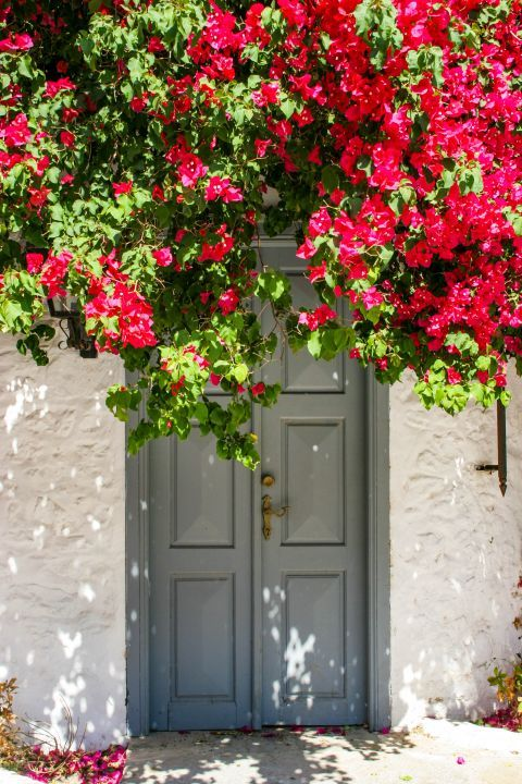 Town: A nice, grey-colored door and fuchsia flowers