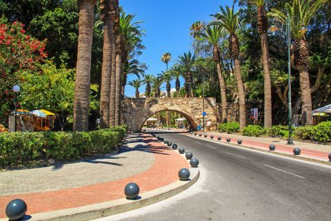 Town: Avenue with palm trees, Kos Town.