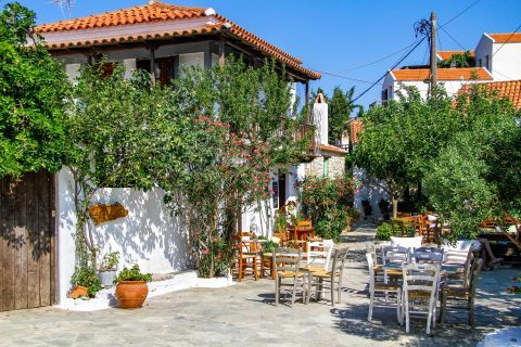 Chora: Leisure moments under the shade of trees.