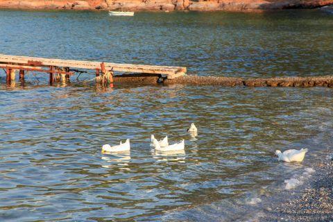 Kerveli: Some lovely ducks.