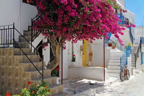 Town: Colorful flowers, Tinos.