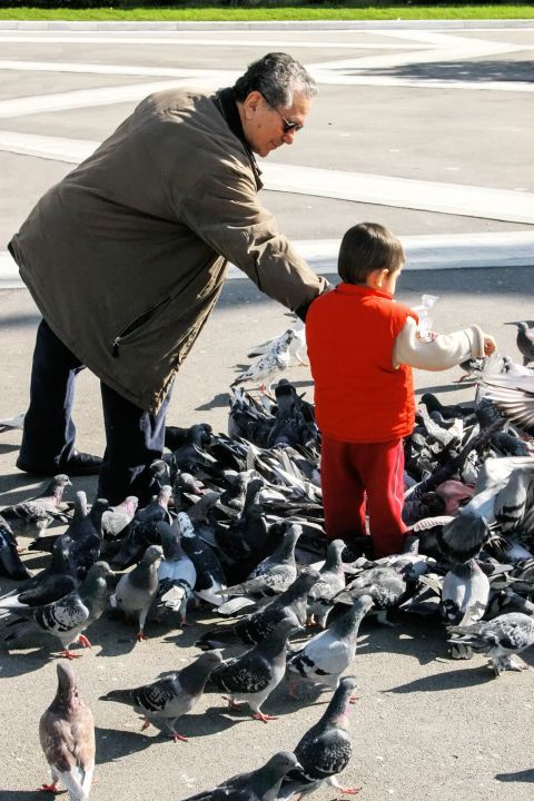 Syntagma: A child feeding the pigeons of Syntagma