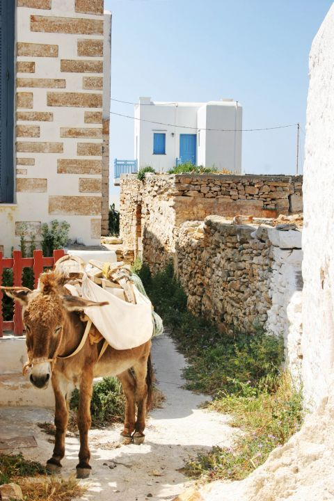 Chora: A lovely donkey.