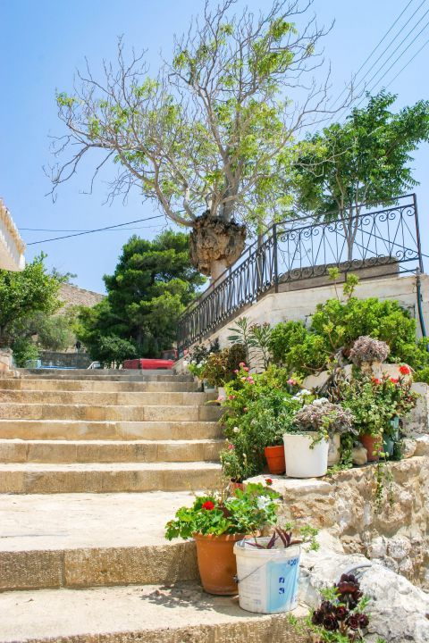 Sitia: Lovely, colorful flowers.