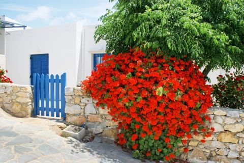 Town: A house with colorful flowers