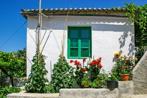 Volimes: A whitewashed house with green colored shutters and some flowers in its yard.