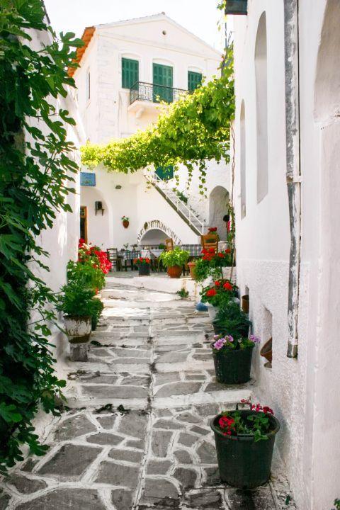 Koronos: Beautiful flowers and flower pots
