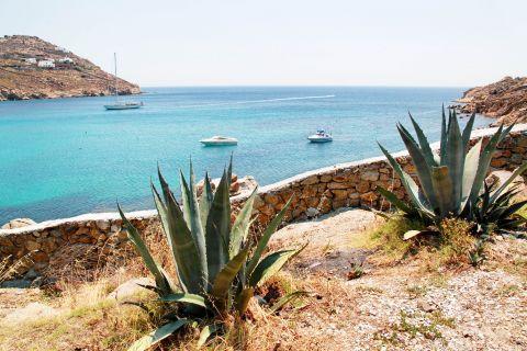 Super Paradise: Short vegetation