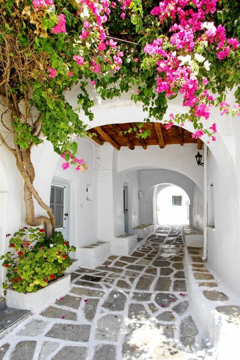 Prodromos: Colorful flowers and a whitewashed house