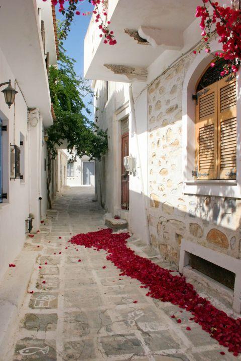 Halki: Fuchsia colored petals