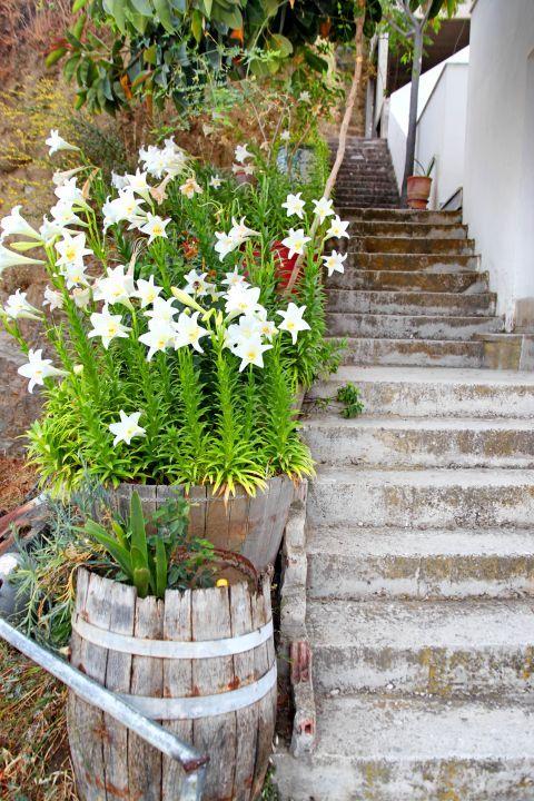 Melanes: Beautiful flowers
