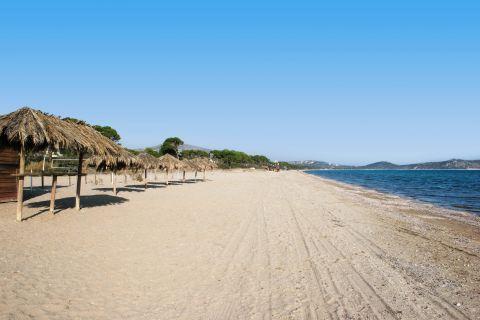 Schinias: The well organized beach of Schinias