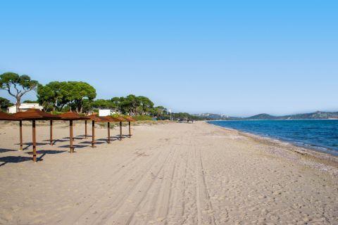 Schinias: The sandy beach of Schinias