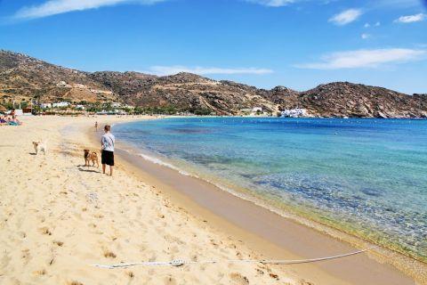 Mylopotas: A family-friendly beach. Mylopotas, Ios.